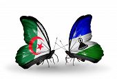 Two Butterflies With Flags On Wings As Symbol Of Relations Algeria And Lesotho
