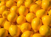 Pile of citrons