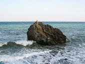 Sea Gull On Rock In Sea