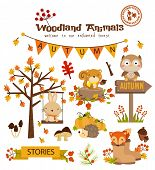 Animal Woodland Autumn Vector Set