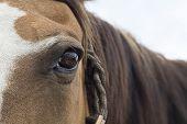 brown Horse eye horizontal