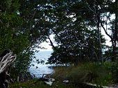 South Florida Marsh