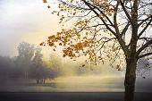Monochrome Autumn Landscape