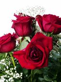 Four Red Roses Amid Green Leaves And Babys Breath
