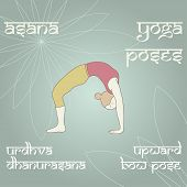 stock photo of dhanurasana  - Urdhva Dhanurasana - JPG