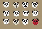 Panda Bear Face Emoji