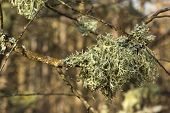 Lichens Of Colors On  Tree Branch