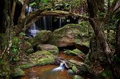 Постер, плакат: The Lush Grotto At Fitzory Falls Australia