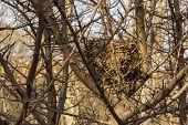 Bird's Nest Hidden In A Tree