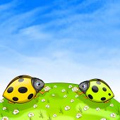 foto of oxen  - Ladybird With Ox - JPG
