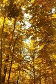 Bright orange autumn forest in the park