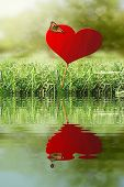 Heart With Butterfly With Water Refections