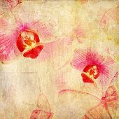Orchid Flower And Butterfly  On Paper  Background