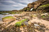 picture of tide  - Saddle Rocks at Cullercoats Whitley Bay here at low tide showing the seaweed rocks and sand - JPG