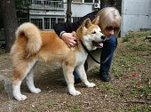 foto of puppy dog face  - Lady hugging the puppy of Japanese dog Akita Inu - JPG