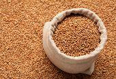 picture of buckwheat  - Full linen sack with buckwheat on background of scattered buckwheat - JPG