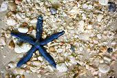 image of starfish  - Blue starfish in the sea - JPG