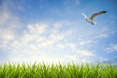 stock photo of grass bird  - field of grass under sky and flying bird background - JPG