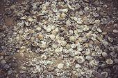 foto of martha  - Large pile of shells in Menemsha Massachusetts - JPG
