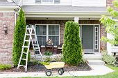 picture of tree house  - Springtime trimming of Arborvitae or ornamental evergreen Thuja trees growing in a flowerbed in front of a house using a stepladder trimmer and small yellow cart to remove debris and foliage - JPG