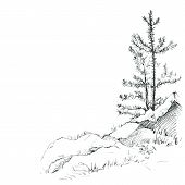 picture of redwood forest  - young pine trees and rocks drawing by pencil - JPG