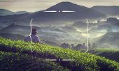 picture of malaysia  - Farmer at tea plantation in Malaysia - JPG