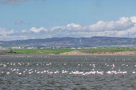 foto of larnaca  - Flamingos in Larnaca Salt Lake  - JPG