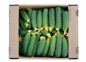Cardboard box with cucumbers isolated on a white background