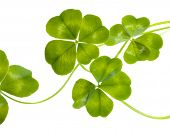 Four Leaves Clovers Pattern