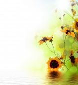 Beautiful Floral Border