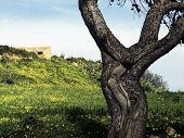 Árbol del crucifijo