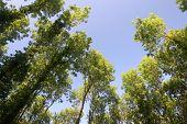 Deciduous Canopy