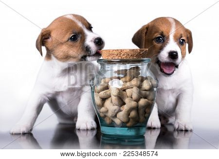 puppy and dog food cookies