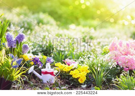 Beautiful Blooming Garden With Flower