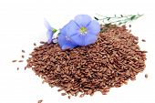 stock photo of flax seed  - Linum usitatissimum beautiful flowers and seeds on white - JPG