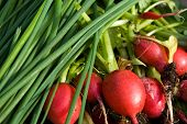 Green Onion And Radishes