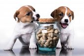 puppy and dog food, cookies in a bone form poster