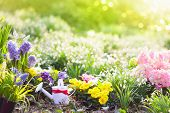 Beautiful Blooming Garden With Flower Bed On Sunny Spring Day. Watering Can, Shovel, Spade. Gardenin poster