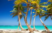 Tropical beach. Ocean and palmtrees background. White sand and crystal-blue sea. Ocean water nature, poster