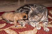 Cat, Resting Cat With Dog, Cute Funny Cat Close Up, Domestic Cat, Relaxing Cat, Cat Resting, Cat Pla poster