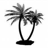 Tropical Palm Silhouette. Jungle Leaves Set. Coconut Palm, Monstera, Fan Palm, Rhapis, Banana Tree.  poster