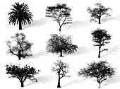 Silueta de los árboles