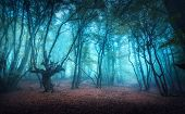 Beautiful Mystical Forest In Blue Fog In Autumn. Colorful Landscape With Enchanted Trees With Orange poster