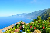 Colorful Flowers And Beautiful Northern Coast Of Madeira Island, Portugal. Typical Hydrangea, Horten poster