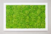 Green Moss On The Wall In The Form Of A Picture. Beautiful White Frame For A Picture. Ecology. poster