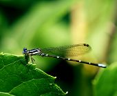 Dragonfly Holding On