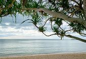 Sand Beach In The Morning With Gray Sky. View From Under The Tree. Tropical Beach, Summer Vacation B poster
