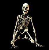 Bone 36