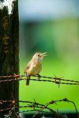 kleine zwitschern Vögel