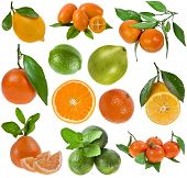 collection fresh citrus isolated on the white background